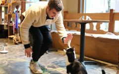 Penguin, one of the many trained cats, giving Theo a high five